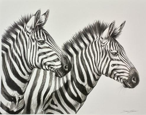 Intense by Darryn Eggleton - Original Drawing on Mounted Paper